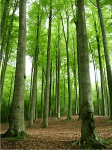 un bosque con arboles verdes